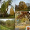 Photo: Autumn colours