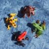 Żaby bojowe