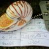Photo: Nautilus beim Fischbesuch