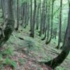 Photo: Wygięte drzewa świadczą o spełzywaniu