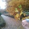 Photo: Jesień :)