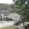 Photo: Mam tu towarzystwo nosorożców