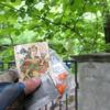 Photo: Brama... pałacyk za krzakami