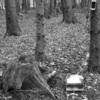 Photo: Eine süße Maus wohnt im Baumstumpf!!!