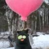 Photo: С чёрным котом