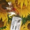 Photo: bij zonnebloemen