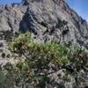 Photo: Гора Сокол