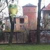 Photo: Sowa z Nałęczowa w OP3075