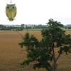 Photo: Sowa z Nałęczowa w OP5659