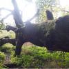 Photo: Dinozaur
