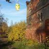 Photo: Sowa z Nałęczowa w OP8HD9