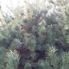 Photo: Sowa z Nałęczowa w OP9AH1
